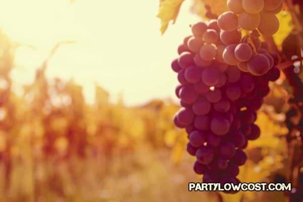 vinos ibiza san antonio